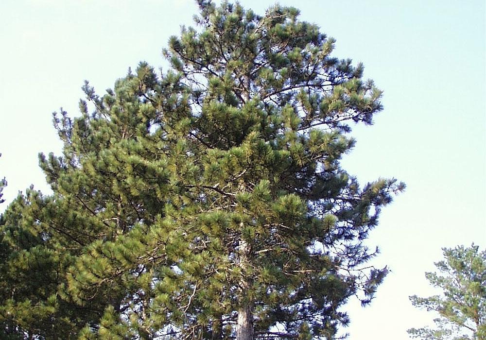 symbols-tree.jpg